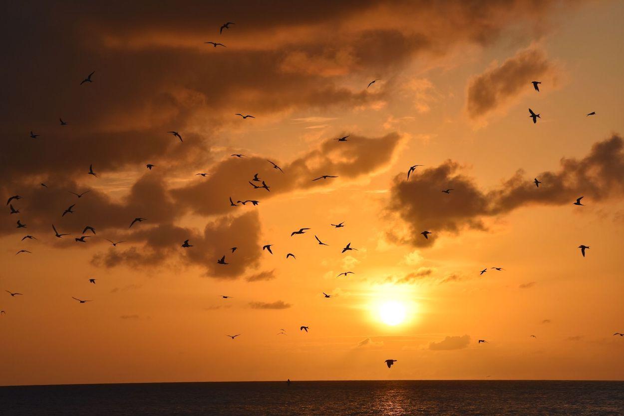 A sun setting over the ocean