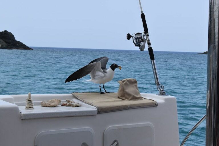 A seagull that has landed on the side railing of a yacht near a fishing pole