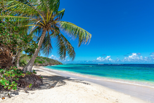 Palm tree on a tropical beach in the Spanish Virgin Islands